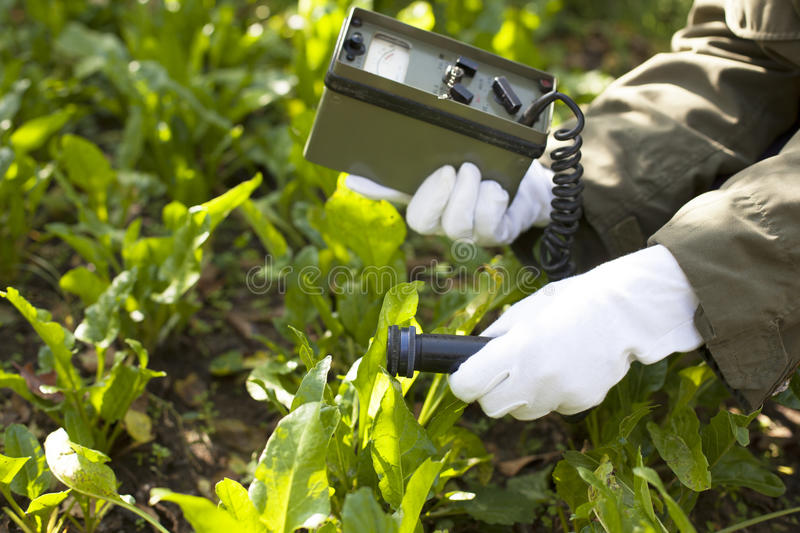 Measuring radiation levels of vegetables stock photos