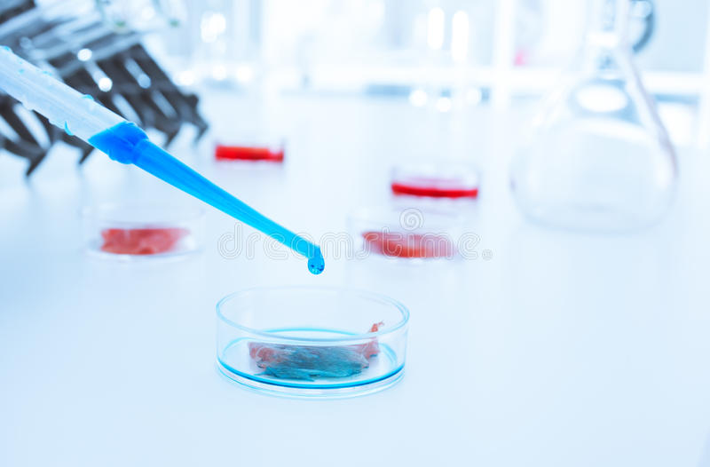 Meat cultured in laboratory conditions.lab. Meat cultured in laboratory conditions royalty free stock image