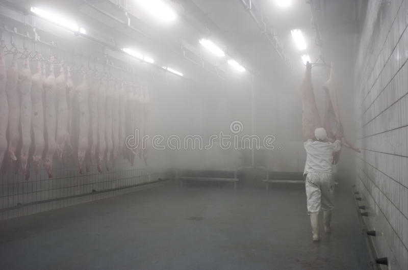 Meat Industry 01 Stock Photos