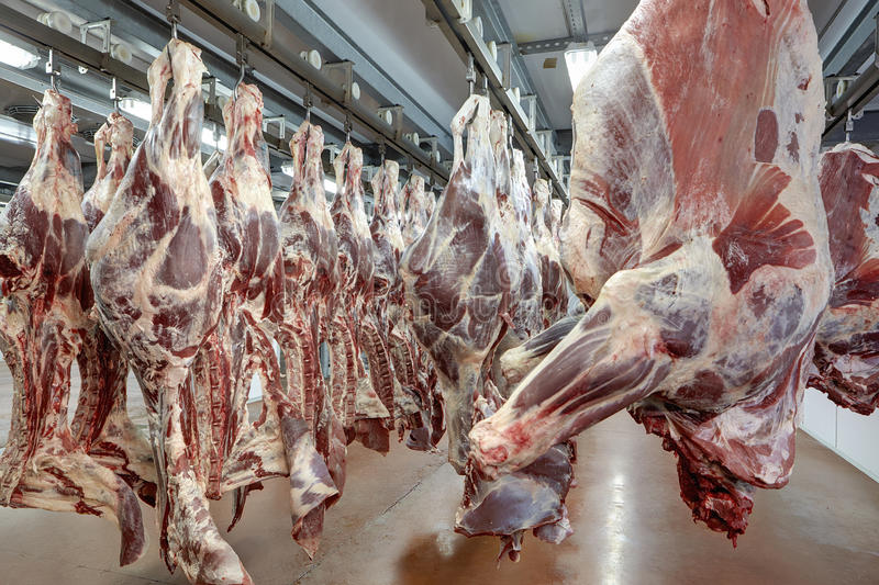 Download Meat industry stock photo. Image of shop, meat, processing - 69807072