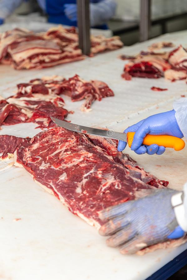 Meat-processing worker cuts the carcass of a cow. stock photography