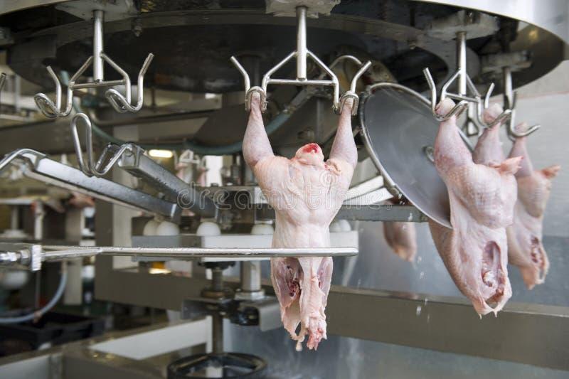 meatproduktionwhite