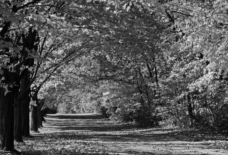 Mecanismo impulsor cubierto árbol, blanco y negro fotos de archivo libres de regalías