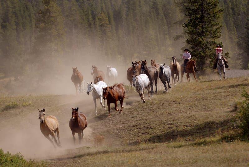 Mecanismo impulsor del caballo con dos Cowgirls fotos de archivo libres de regalías