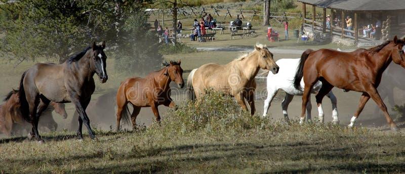 Mecanismo impulsor del caballo con el Cookout en fondo foto de archivo libre de regalías