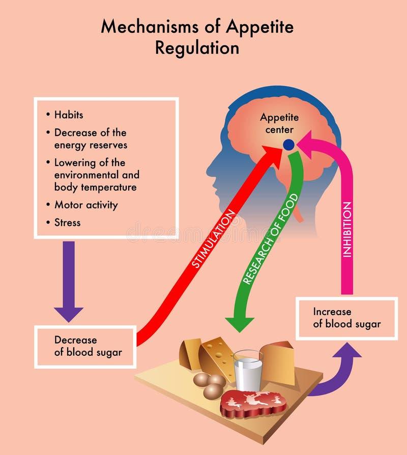 Mecanismos do regulamento do apetite ilustração do vetor