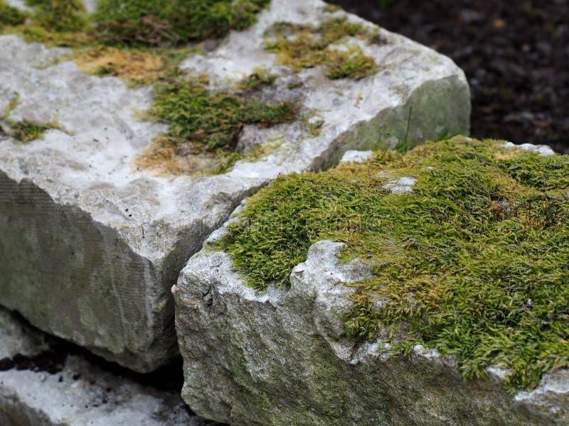 Mech dorośnięcie Na Kamiennych cegłach obrazy stock