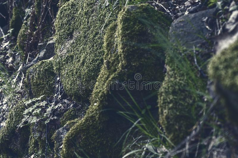 Mech i roślinność w skałach w górze zdjęcie stock