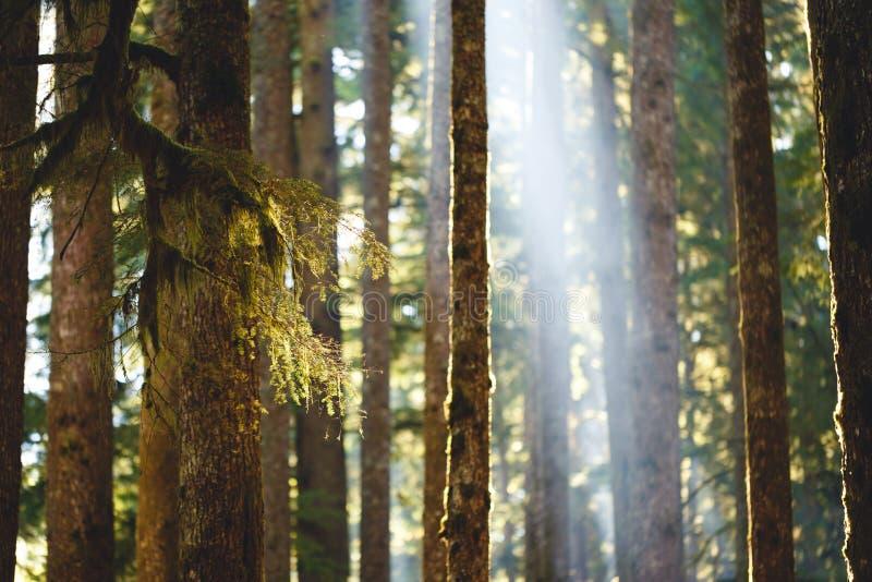 Mech na drzewach zdjęcie royalty free