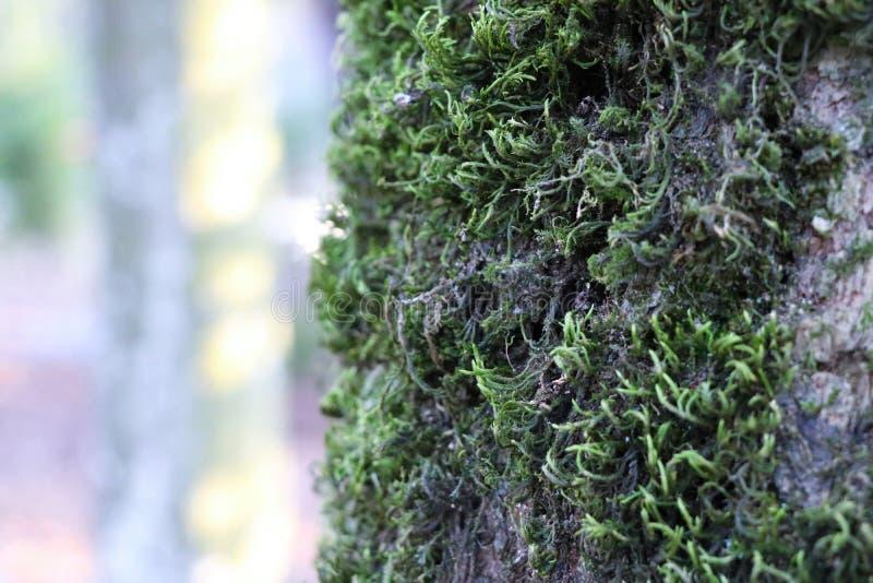 Mech na drzewie w zakończeniu up fotografia royalty free