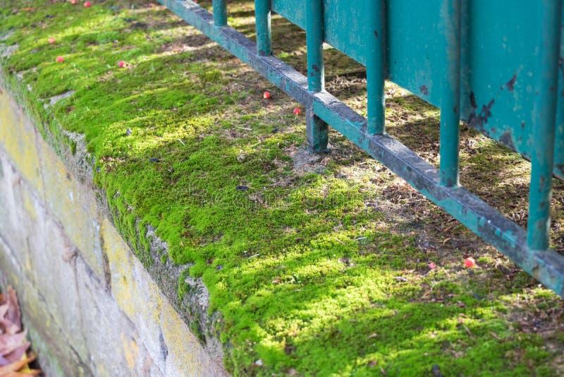 Mech na ogrodzeniu obraz stock
