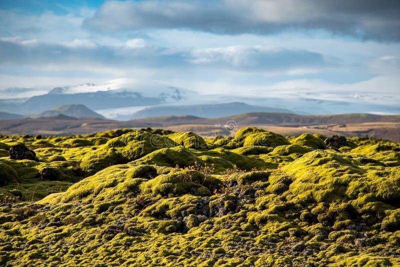 Mech pokrywa na powulkanicznym krajobrazie Iceland obrazy stock