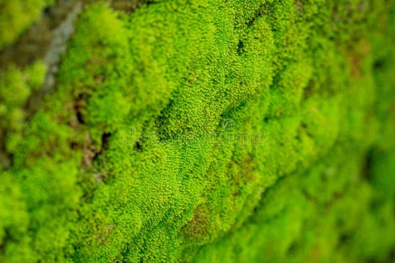Mech tekstura, zielony tło zdjęcie stock