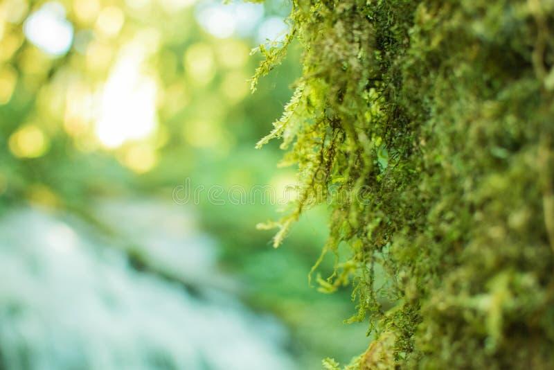 Mech trawa zakrywająca na mokrawym kamieniu i ziemi, widzii freshy clo obraz stock