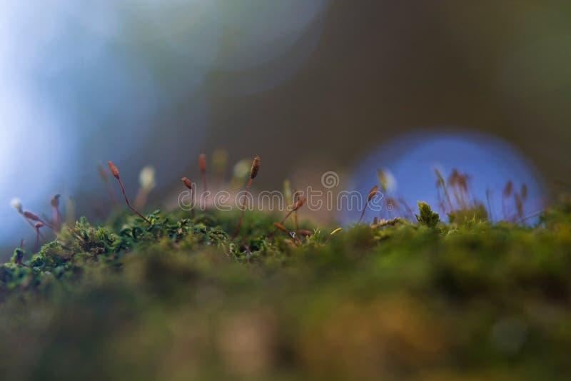 Mech w drzewie zdjęcia stock