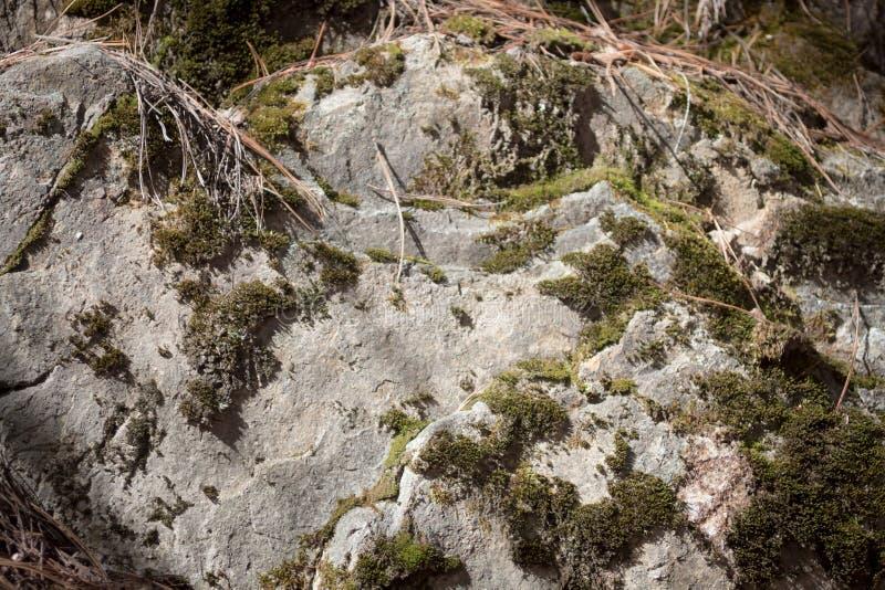Mech zakrywał skałę w świetle słonecznym z nieżywą trawą zdjęcie stock
