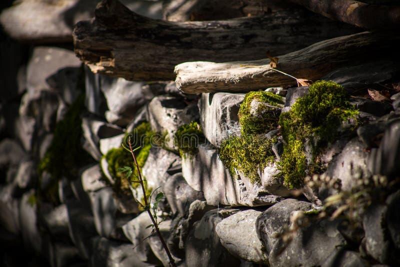mech zakrywający kamień Piękny mech i liszaj zakrywający kamień Jaskrawy - zielony mech tło textured w naturze Naturalny mech dal obrazy stock