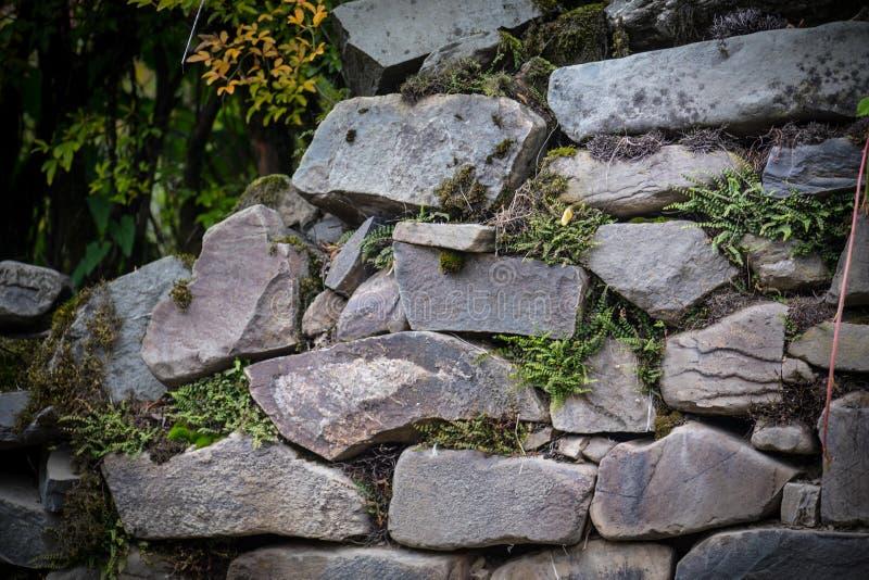 mech zakrywający kamień Piękny mech i liszaj zakrywający kamień Jaskrawy - zielony mech tło textured w naturze Naturalny mech dal zdjęcia royalty free
