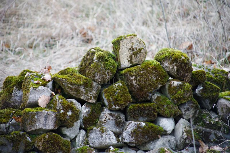 mech zakrywający kamień Piękny mech i liszaj zakrywający kamień Jaskrawy - zielony mech tło textured w naturze Naturalny mech na  fotografia stock