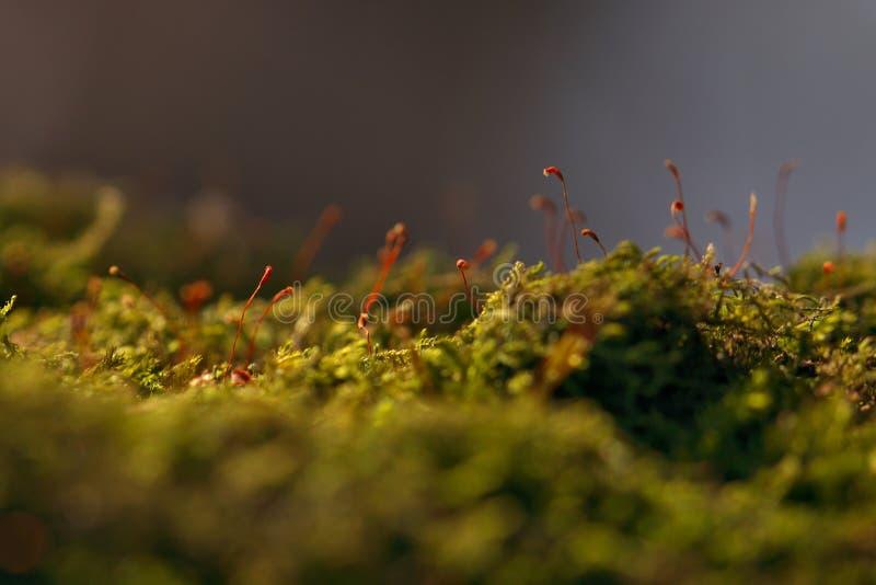 Mech & zarodnia zdjęcia stock