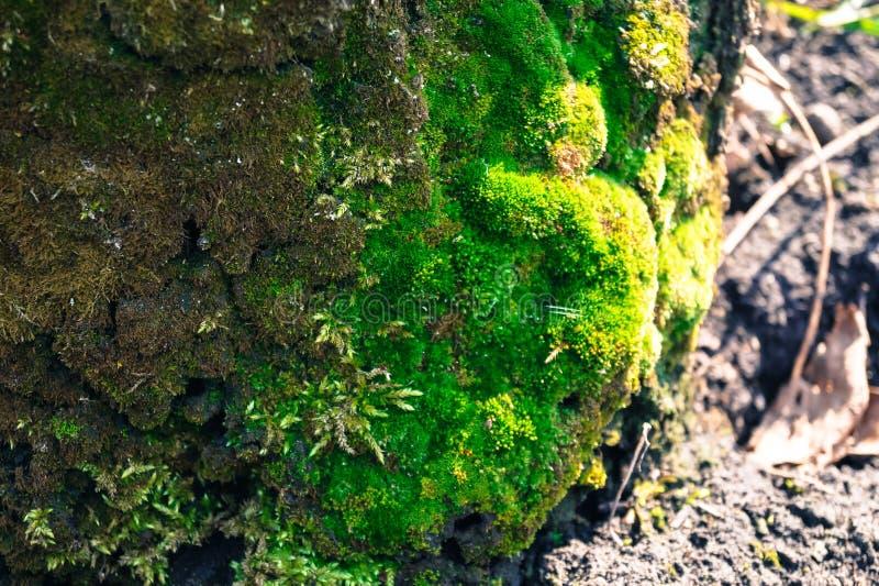 mech zielony kamień fotografia stock