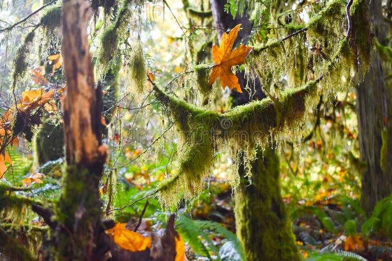 Mechaci drzewa w tropikalnym lesie deszczowym fotografia stock