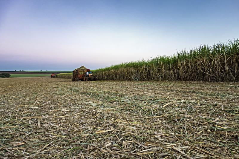 Mechanical harvesting sugar cane field at sunset in Sao Paulo Brazil - Tractor waiting their turn in harvesting sugar cane field -. Photo of Mechanical stock image