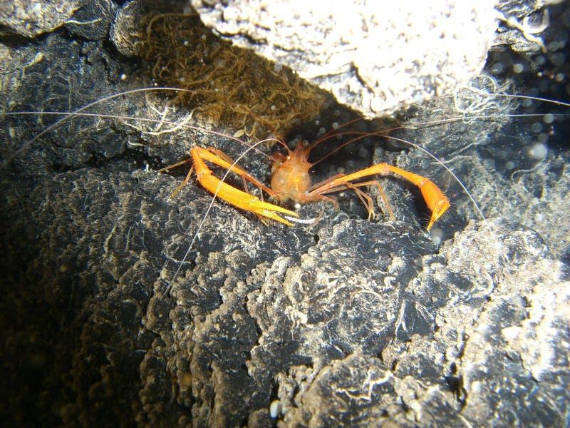 Mechanical Shrimp Royalty Free Stock Images