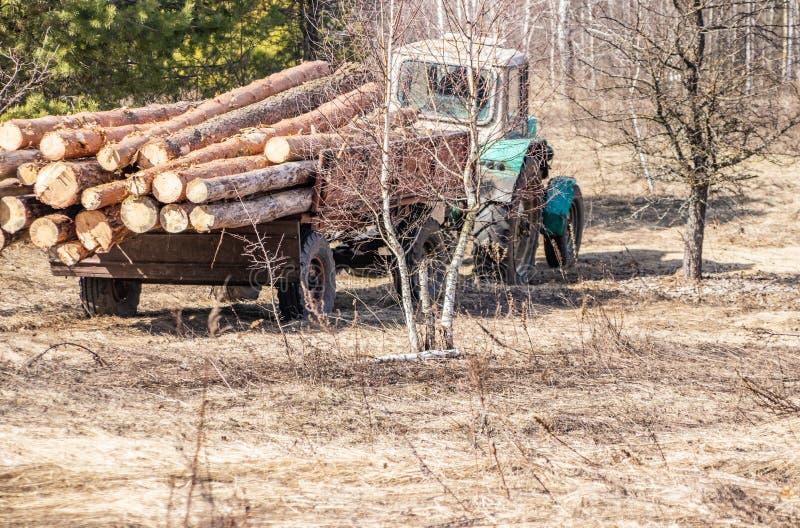 Mechanisch lading en vervoer van pijnboomhout die een tractor met behulp van royalty-vrije stock afbeeldingen