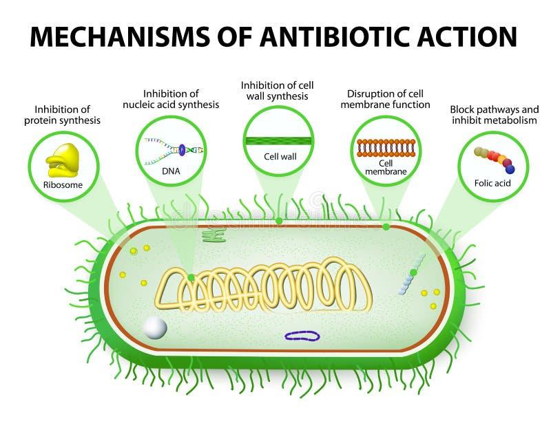 Mechanismen van Actie van Antimicrobials stock illustratie