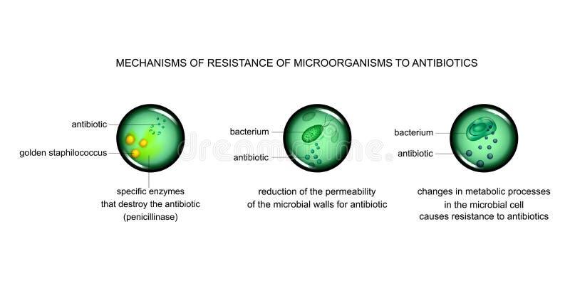 Mechanismen van microbiële celweerstand tegen antibiotica royalty-vrije illustratie
