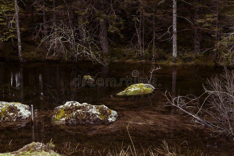 Mechate skały w lasowym jeziorze, bagażniki drzewa Wciąż woda, zanurzający kamienie, ciemność Odbicia w przejrzystej wodzie zdjęcie royalty free