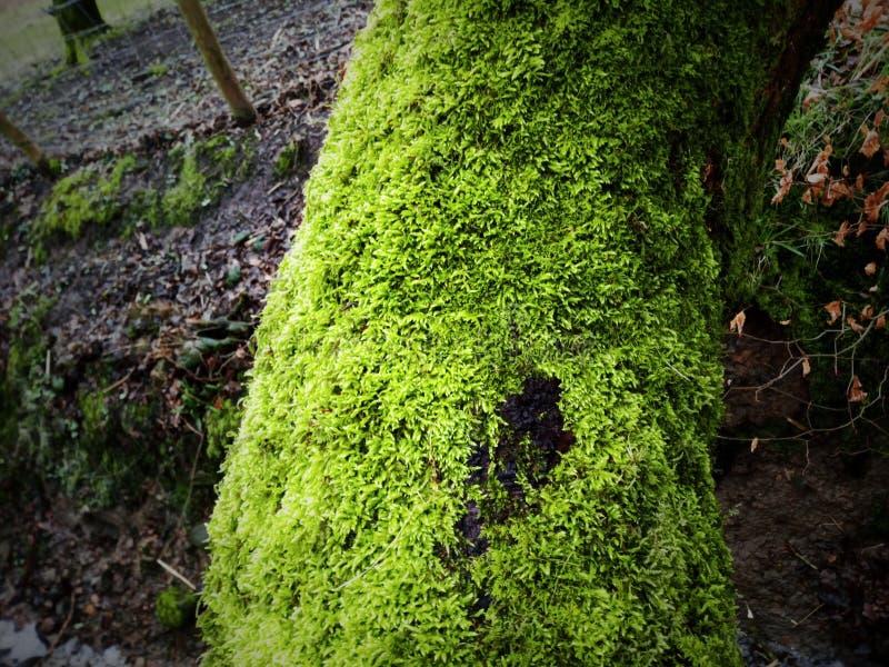 Mechaty drzewny desktop tło zdjęcie stock