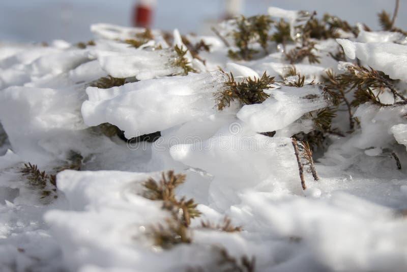 Med is buske på det snöade berget arkivbild