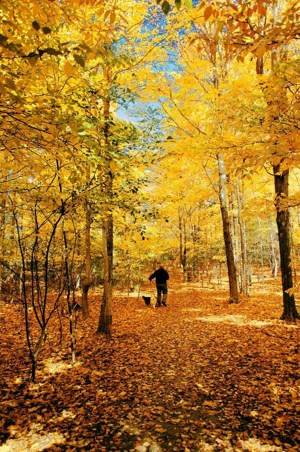 Med hundkapplöpning i höstskogen royaltyfri fotografi