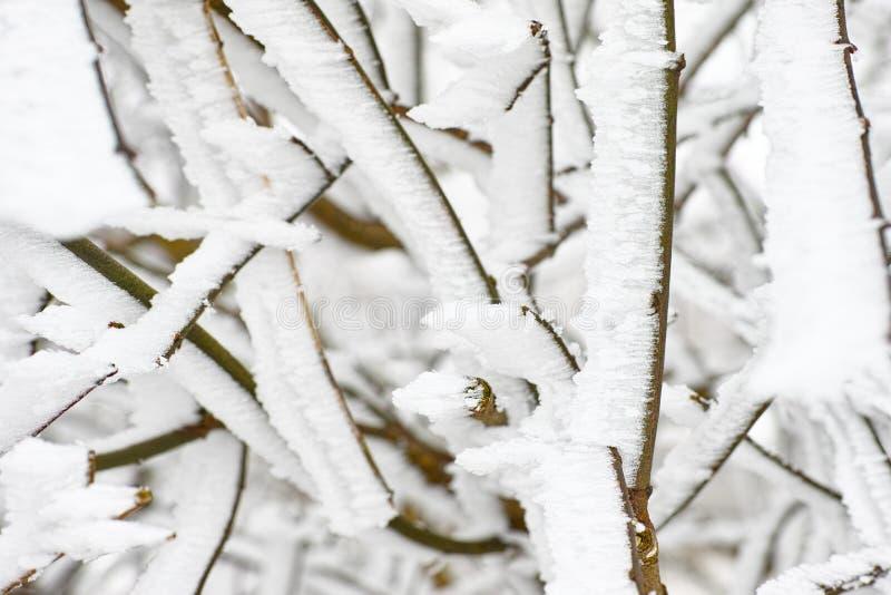 Med is snö på filialnärbild fotografering för bildbyråer