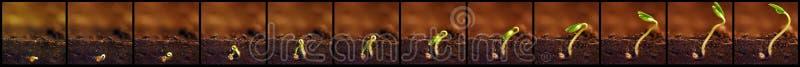 meddelat var framtida växande plantor Växter växer etapper Plantatillväxtperioder royaltyfri foto