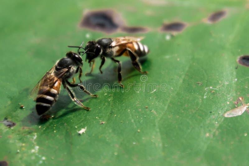 Mededeling van bijen stock foto's