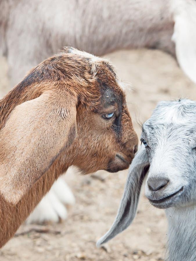 Mededeling van jonge geitjes royalty-vrije stock afbeelding