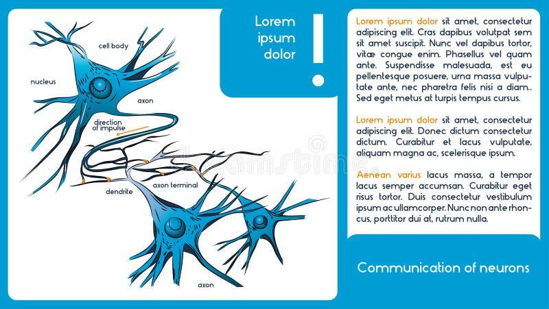 Mededeling van neuronen Neuronen royalty-vrije illustratie