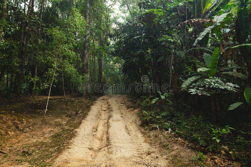 Medel tröttar spår på gyttja i Forrest Wheel Tracks på den torra jorden royaltyfri fotografi