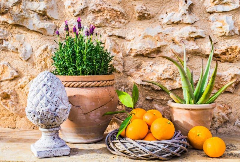 Medelhavs- garnering med lavendel- och apelsinfrukter arkivbild