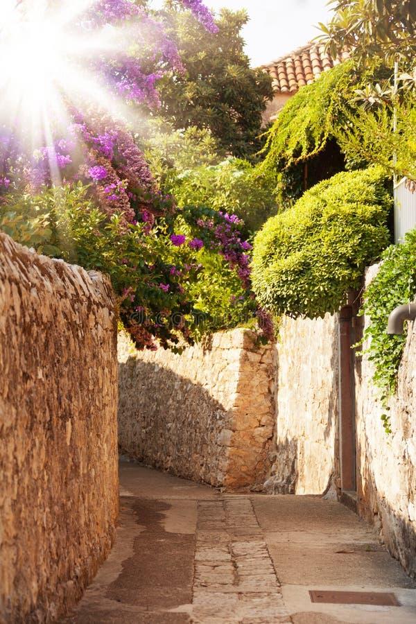 Medelhavs- gata med blommor och träd royaltyfria bilder