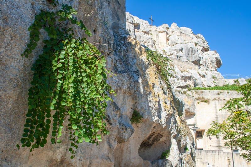 Medelhavs- hoppa omkring växten på vaggar i sassien eller stenarna av Matera royaltyfria bilder