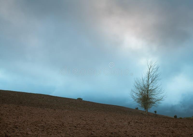 Medelhavs- jordbruksmark med trädet och cloudscape arkivbilder