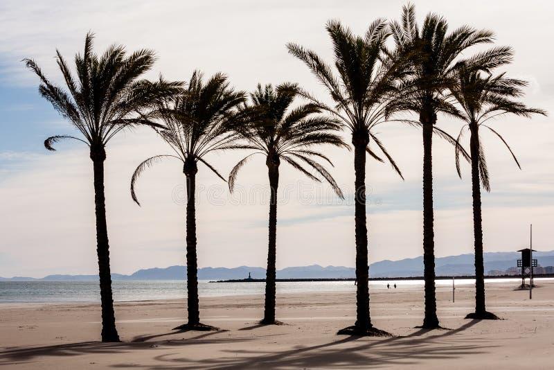 Medelhavs- palmträd - Cullera Valencia - Spanien fotografering för bildbyråer