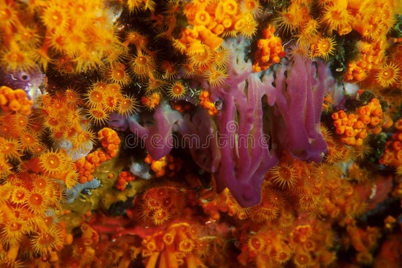medelhavs- seabed royaltyfria foton