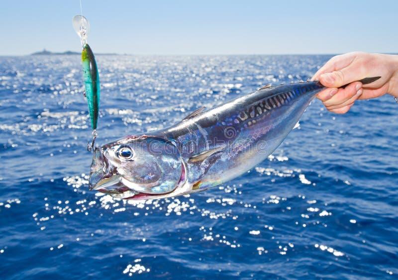 medelhavs- tonfisk för stor fiskelek royaltyfri fotografi