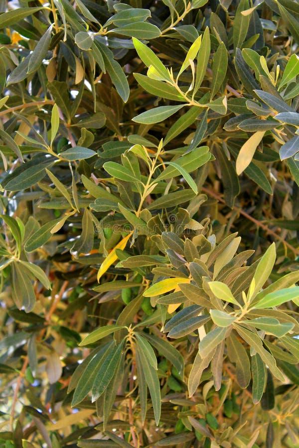 Medelhavs- trädgård, closeup filialen arkivfoto