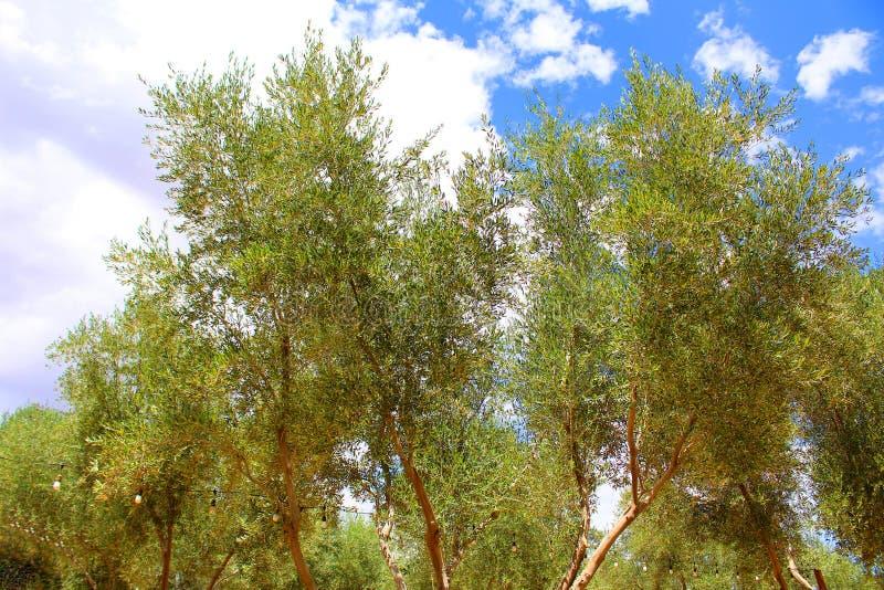 Medelhavs- trädgård, closeup filialen royaltyfria bilder